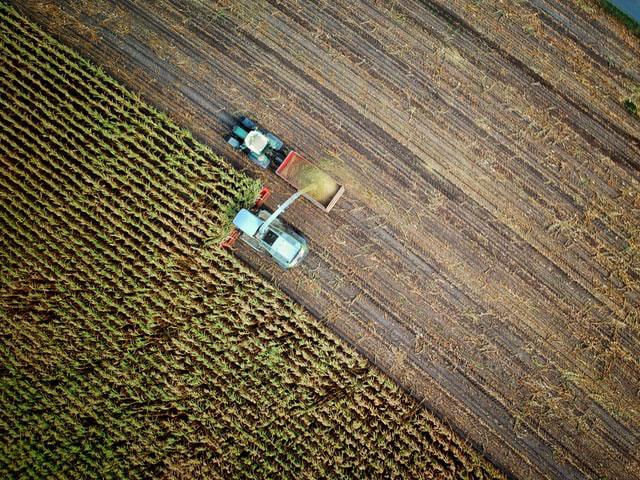 Efektywna ochrona herbicydowa kukurydzy