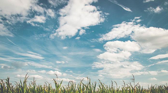 Ochrona herbicydowa kukurydzy, na którą warto postawić